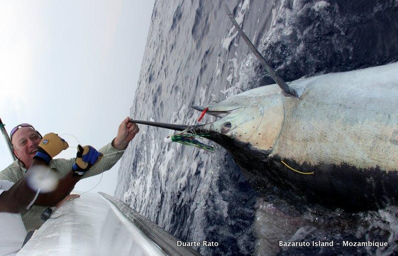 Fish in the ocean hookup website