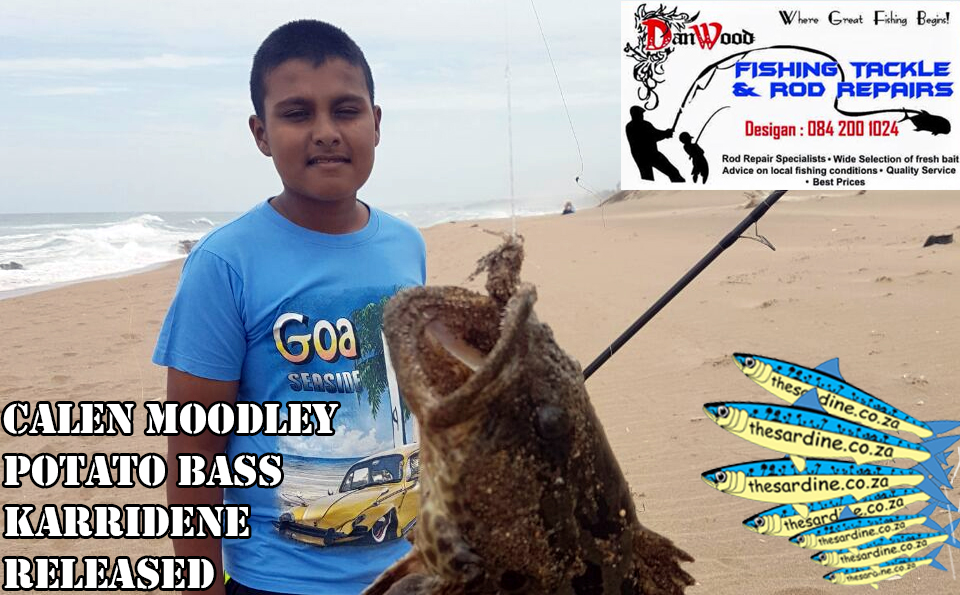 Calen Moodley caught and released this Potato Bass off Karridene Beach