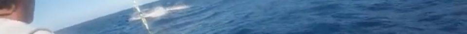 Inhaca Island-1000lb-Blue-M