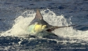MarlinMoz Sportfishing Charters